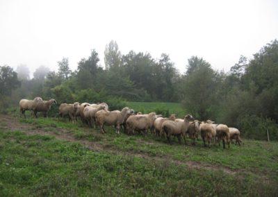 Azienda Agricola Agriturismo Santa Lucia dei Sibillini a Montefortino11