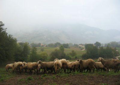 Azienda Agricola Agriturismo Santa Lucia dei Sibillini a Montefortino12