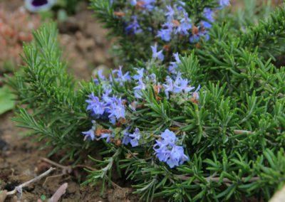 Primavera Agriturismo Santa Lucia dei Sibillini Montefortino 10