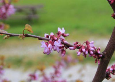 Primavera Agriturismo Santa Lucia dei Sibillini Montefortino 11