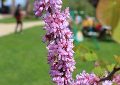 Primavera Agriturismo Santa Lucia dei Sibillini Montefortino 12