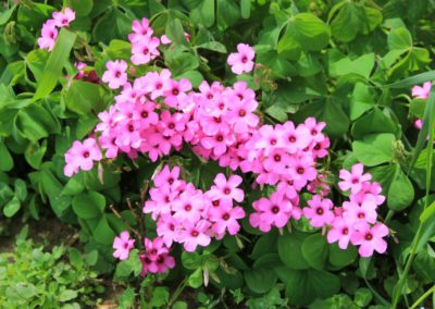 Primavera Agriturismo Santa Lucia dei Sibillini Montefortino 13