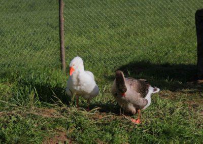 Primavera Agriturismo Santa Lucia dei Sibillini Montefortino 18