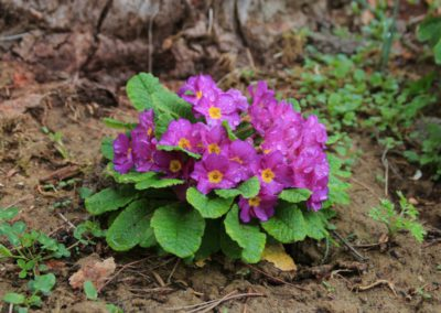 Primavera Agriturismo Santa Lucia dei Sibillini Montefortino 5