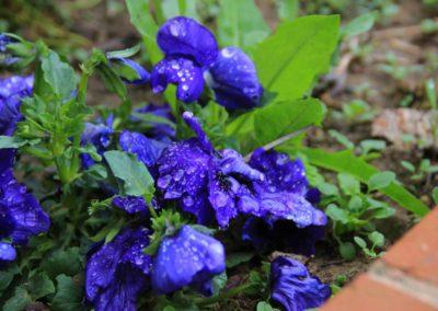 Primavera Agriturismo Santa Lucia dei Sibillini Montefortino 6