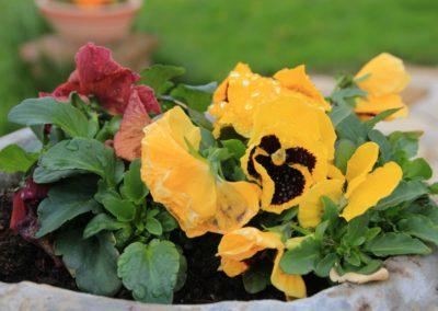 Primavera Agriturismo Santa Lucia dei Sibillini Montefortino 7