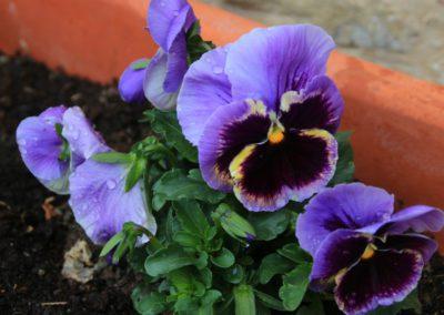 Primavera Agriturismo Santa Lucia dei Sibillini Montefortino 9